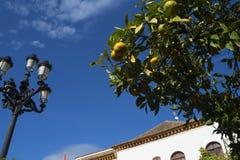 马尔韦利亚老镇太阳海岸的安达卢西亚,西班牙 库存图片