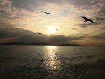 马尔马拉海和海鸥在日落 免版税库存照片