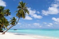 马尔代夫、一个热带海岛有棕榈树的和一个看法在海洋 免版税库存图片