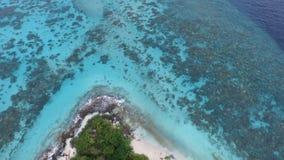 马尔代夫海岛鸟景色  免版税库存图片