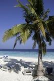 马尔代夫海滩场面 免版税库存照片
