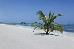 马尔代夫海滩 图库摄影