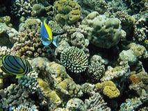 马尔代夫珊瑚礁 免版税图库摄影