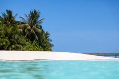 马尔代夫,与棕榈树的海滩 库存照片