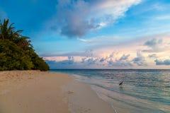 马尔代夫,热带天堂,在海滩的日出 免版税库存图片