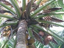 马尔代夫 棕榈 免版税库存照片