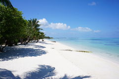 马尔代夫sland椰子发辫海滩梦想 免版税图库摄影