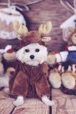 马尔他小狗驯鹿服装垂直 免版税库存图片
