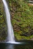 马尾秋天,哥伦比亚河峡谷全国风景区,华盛顿州 库存图片