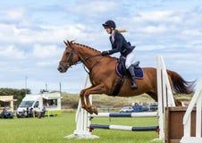 马展示跳跃的事件 运动会 库存照片