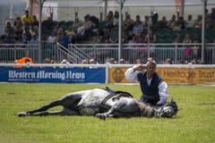 马展示 图库摄影