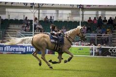 马展示 免版税库存图片