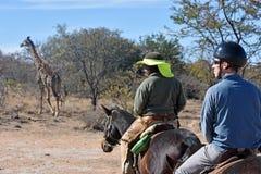 马徒步旅行队 库存图片