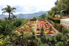 马德拉岛植物园 免版税库存图片