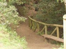 马德拉岛海岛庭院 库存照片