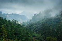 马德拉岛海岛森林  免版税库存照片