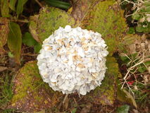 马德拉岛海岛花园蓝色 免版税库存照片