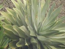 马德拉岛海岛花园 库存图片