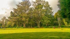 从马德拉岛的美妙的庭院 图库摄影