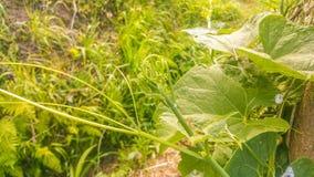 从马德拉岛的自然细节 免版税库存照片