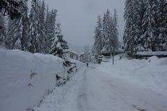 马德西莫,意大利 时数横向季节冬天 分行包括雪结构树 库存图片