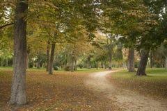马德里西班牙 2017年10月17日 停放与125公顷和超过15,000棵树的El Retiro, 免版税库存图片