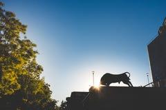 马德里-公牛剪影在Plaza de Toros 免版税图库摄影