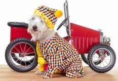 马戏团小丑狗和小丑汽车 免版税库存图片