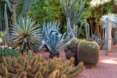 马拉喀什,摩洛哥- 11日2019年:在位于马拉喀什的雅尔丹Majorelle植物园的各种各样的仙人掌,摩洛 库存照片