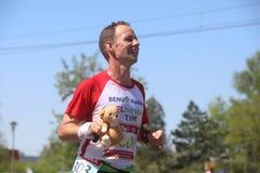 马拉松参加者拿着一个熊玩具在城市街道上参加的第31国际贝尔格莱德比赛期间 库存图片