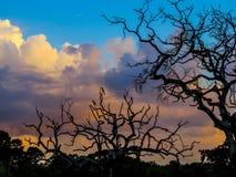 马拉巴尔染色犀鸟(Anthracoceros coronatus) 免版税库存图片