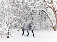 马捐税的跑在新的下落的雪 免版税图库摄影