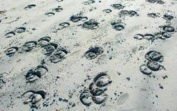 马掌版本记录在白色沙子的 免版税库存照片