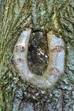 马掌结幸运的结构树 免版税库存照片