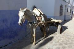 马推车在摩洛哥 库存照片