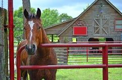 马支持的门0f马槽枥 库存图片