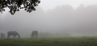 马数 图库摄影