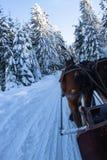 马有一坏天在冬天 库存照片