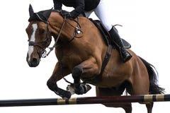 马术运动,马跳跃的事件,隔绝在白色背景 免版税图库摄影