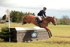 马术运动:马跳跃 库存照片