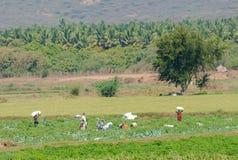 马杜赖,印度- 2月17 :未认出乡下人h 免版税库存图片