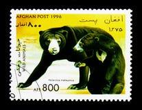 马来亚太阳熊(Helarctos malayanus),熊serie,大约1996年 图库摄影