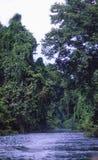 马来西亚:一次小船旅行通过第二片旧雨林在大汉山国家公园国立公园 库存照片