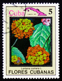 马樱丹属古巴,古巴的serie花的camara和地图,大约198 库存图片