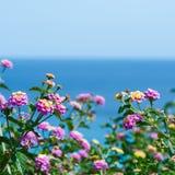 马樱丹属开花反对蓝色海,明信片,背景为 免版税库存照片