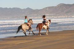 马每在海滩的天 库存图片