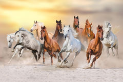 马沙漠奔跑 库存图片
