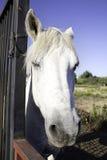 马注意 免版税图库摄影