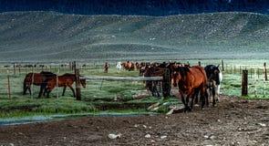 马清早召集在大农场的 图库摄影