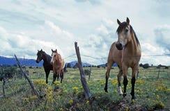 马牧场地 免版税图库摄影
